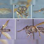 ciencia, ecuador, nueva especie, insecto, caracteristicas