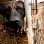Perro víctima de maltrato animal