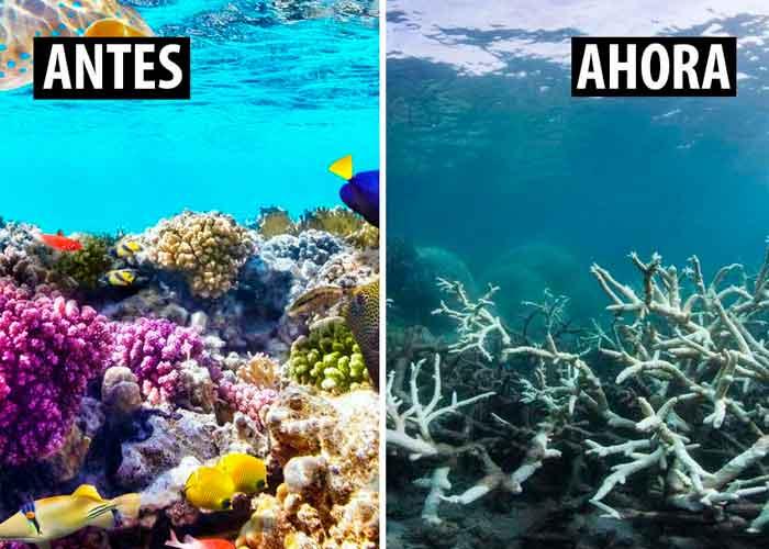 """La Unesco no declara """"en peligro"""" a la Gran Barrera de Coral, pese a las recomendaciones de científicos"""