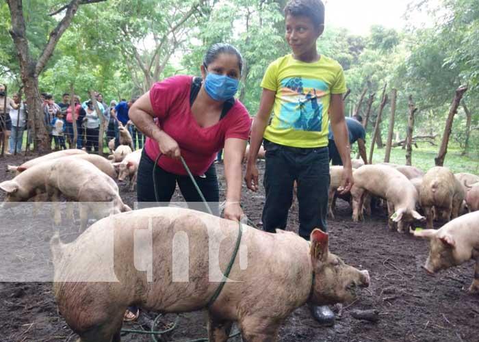 Bonos de cerdas entregadas a productores de Granada