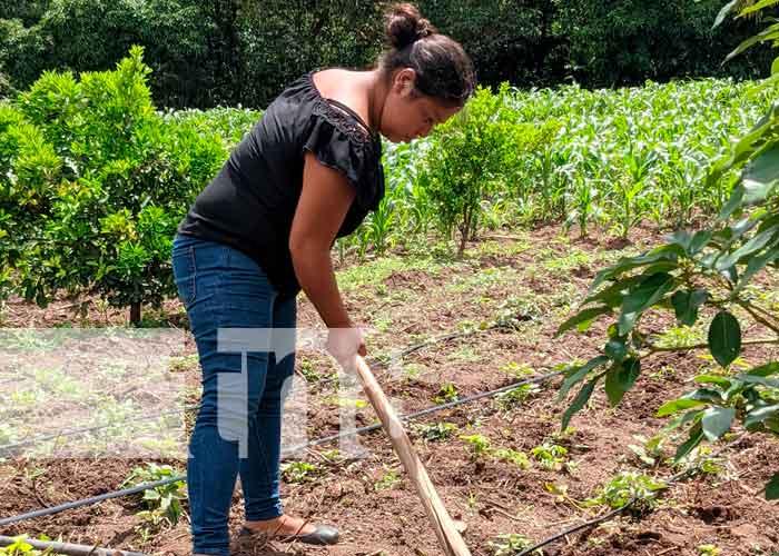 Imagen de una mujer aporcando maíz en Yalagüina