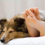 Foto: En tiempos de coronavirus es mejor no dormir con tus mascotas / Referencia