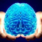 Nuevo tipo de célula cerebral