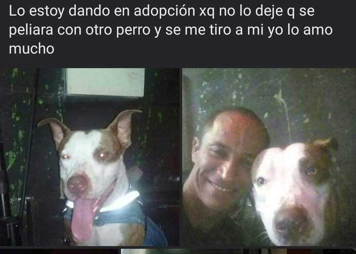"""Perro """"Rambo"""" que atacó a su dueño en Chinandega"""