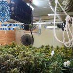 españa, marihuana, narcotrafico, crimen organizado,