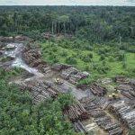 brasil, deforestacion, amazonia brasileña, medio ambiente,