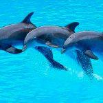 delfines, océanos, hábitat, libertad,
