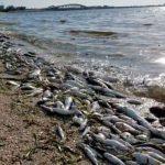 Foto: Marea roja tóxica dejó 600 toneladas de peces muertos en Florida/Referencia
