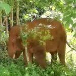 china, elefante, manada,