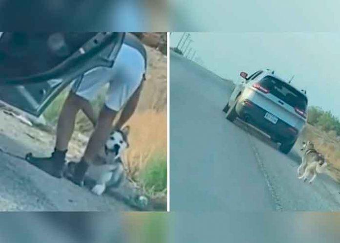 ¡Sin corazón! Perrito es abandonada por su dueño en una carretera de Texas