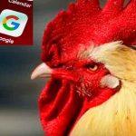 ¡Galloooo! Graciosa traducción de Google se vuelve viral ¿ya lo escuchaste?
