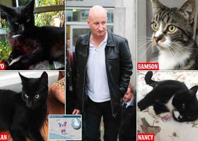 Reino Unido: Asesino en serie de gatos es condenado a prisión