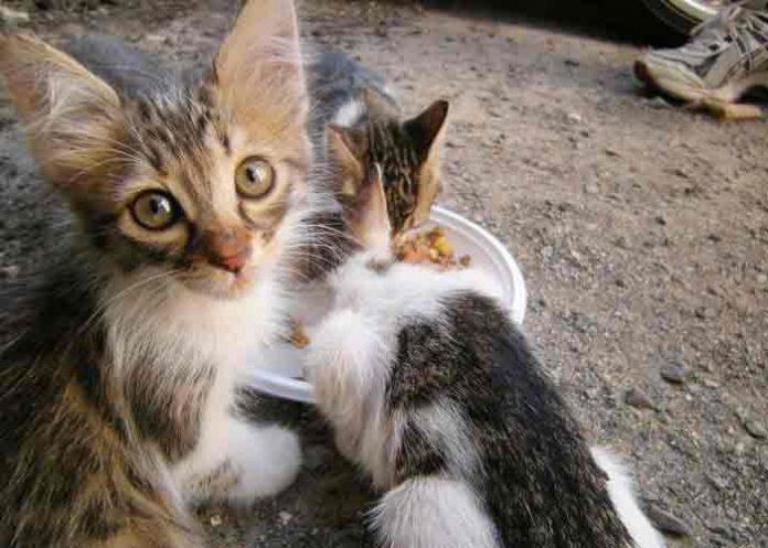 Prisión para mujer que rescataba gatos callejeros y los mataba de hambre