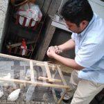 Emprendimiento con huevos de codorniz en Managua