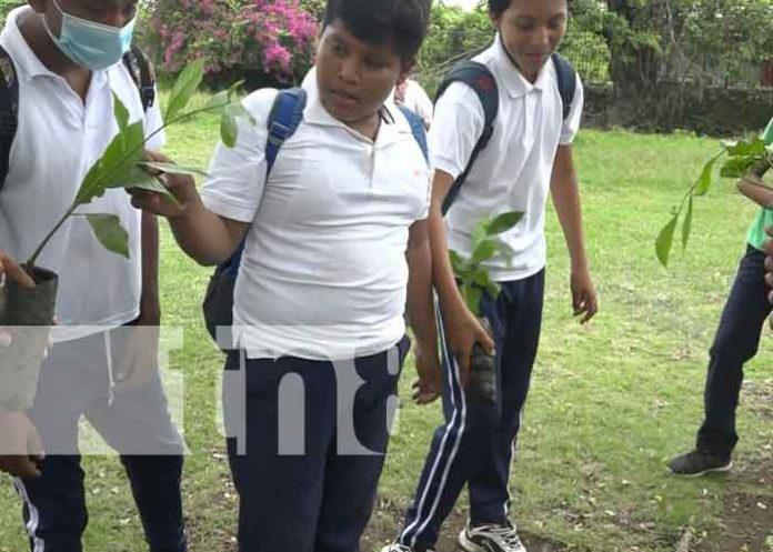 nicaragua, ometepe, reforestacion,