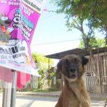 Vacunación contra la rubia en Managua, por el Día Mundial del Perro