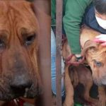 Perrito llora al ser rescatado de un matadero clandestino en Corea del Sur
