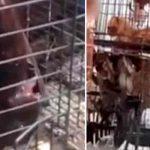 Los mercados húmedos llenos de animales vivos siguen proliferando en Asia