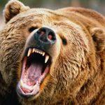 Foto: Un oso ataca a grupo de turistas en un parque en Siberia y mata a uno / referencia
