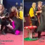 Impactante ataque de un oso en un circo de Rusia se vuelve viral