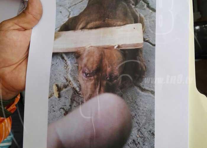 Referencia del caso del perro Zeus en Managua