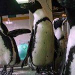 estados unidos, pinguinos, muerte, animales,