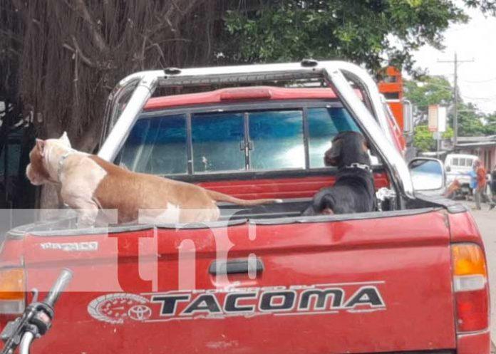 Lugar en Masaya donde se registró ataque de dos perros Pitbull