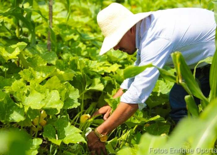 Campesino impulsando la producción en Nicaragua