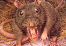 ¡De impacto! Mujer es atacada por más de 100 ratas en un parque de Londres