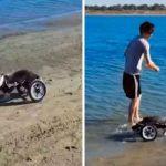 tendencias, perrito, silla de ruedas,