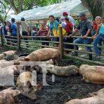 Inversión para el hato porcino en Río San Juan