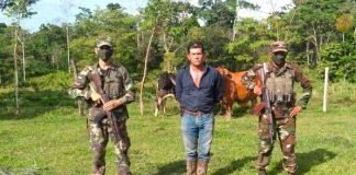 Foto: Ejército de Nicaragua realizó la ocupación de semovientes y equino / EN