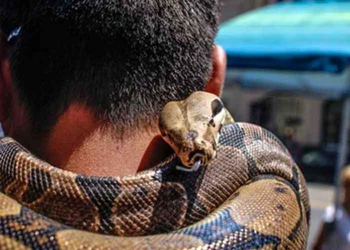 Afirmó ser inmune al veneno de serpientes y fue asesinado por una cobra