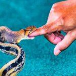 Estados Unidos: mujer descubre 18 serpientes bajo su cama