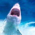 video, mar rojo, tiburon, paracaidas, viral, video viral, redes sociales,