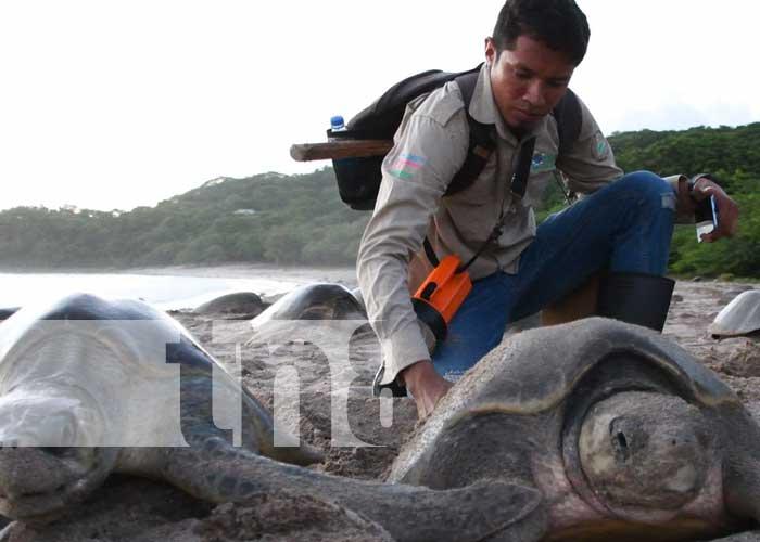 Reserva La Flor, en Rivas, santuario de tortugas