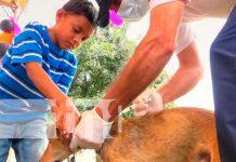 Vacunación canina en Nueva Segovia