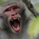 China confirma la primer muerte de una persona a causa del virus del mono