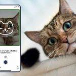 tecnologia, gatos, aplicacion, tably, cuido