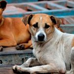 Sabías que hoy se celebra el Día Internacional del Animal sin Hogar
