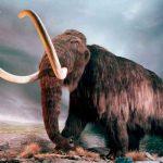 ciencia, mamut lanudo, estudio, colmillo, cientificos