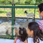 Exhibición de cabras en la Expo Feria Ovino Caprino en Nicaragua