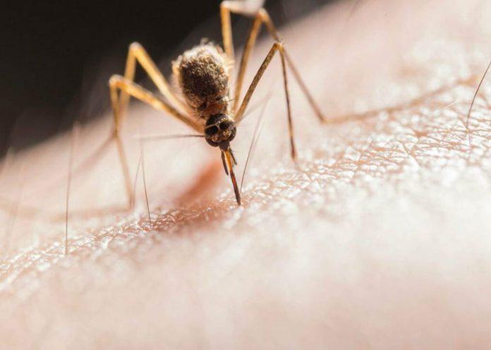Increíbles detalles que no sabías sobre el mosquito