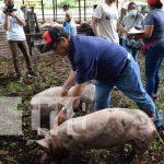 Entrega de bono de cerdas para familias en León