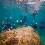 Submarinistas hallan un coral gigante de 400 años en Australia