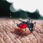 La región San Pedro Sula en Honduras en alerta amarilla por casos de dengue