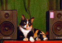 """Un gato """"organiza una fiesta"""" en España y despierta a los vecinos / FOTO / Pixabay"""