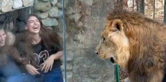 Chicas burlándose de León en zoológico del Líbano
