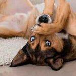 ¿Tenés perros? Estos son los olores que ellos no pueden soportar