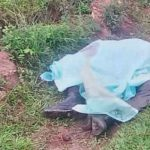 Perros rottweiler matan a un hondureño y a su mascota
